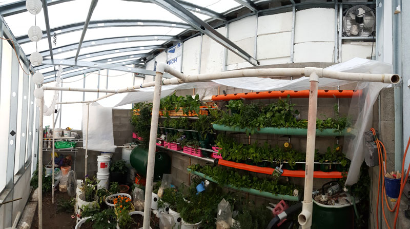 Pit Greenhouse 2015