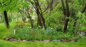 Woodland Garden 2021