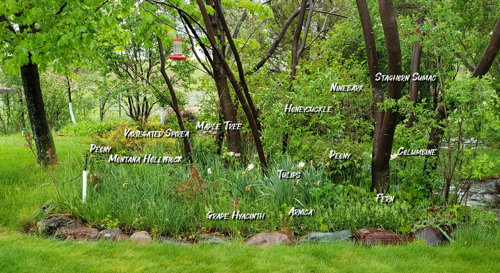 Forest Garden 2021 with names